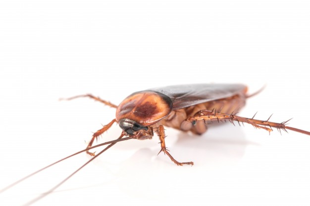cockroach pest control company