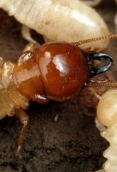 termite-barriers maintenance